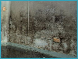 Black mould removal in Carlisle
