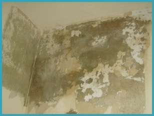 Specialist Damp Proofing in Carlisle, Cumbria, workington from Davidson's DPR